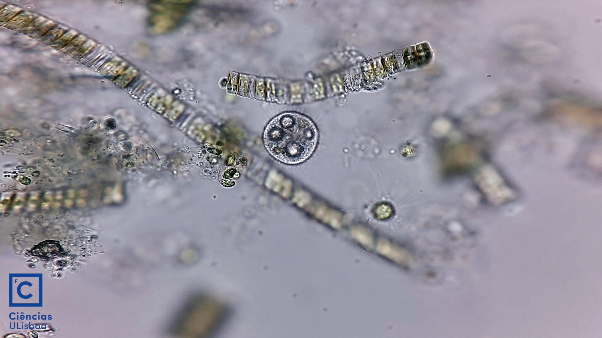 Aquarium water drop 1